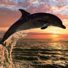 6213_Dolphin_Sunset_Jigsaw_Puzzle_lg