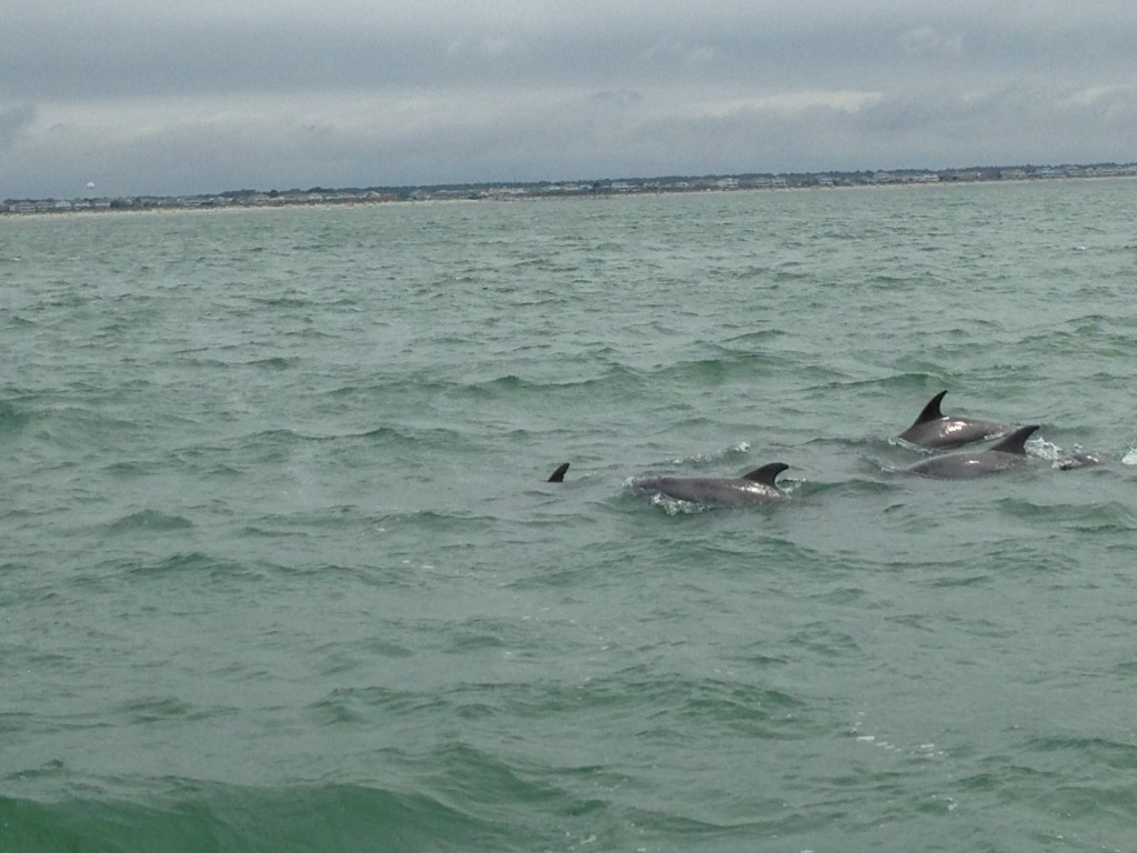 Dolphin Boat Tours Myrtle Beach